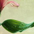 dim colours II by Priska Wettstein