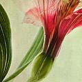 Dim Colours by Priska Wettstein