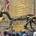Dinosaur At The Natural History Museum by Gregory Dyer