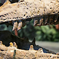 Dinosaur Jaws Exhibit by Jim West