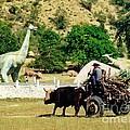 Dinosaur Park by John Malone