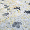 Dinosaur Tracks by James Steinberg