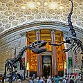 Dinosaurs At The Natural History Museum by Gregory Dyer