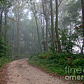 Dirt Path In Forest Woods With Mist by Olivier Le Queinec