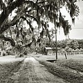 Dirt Road On Coosaw Plantation by Scott Hansen