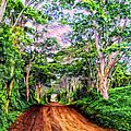 Dirt Road To Secret Beach On Kauai by Dominic Piperata