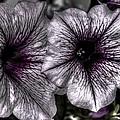 Dirty Flowers 4 by Deborah Ritch