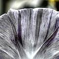 Dirty Flowers by Deborah Ritch
