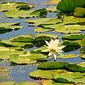 Dirty Monet by Art Dingo