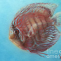 Discus by Troy Wilfong