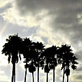 Disney's Epcot Palm Trees by Joan  Minchak