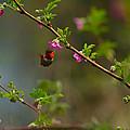 Distant Hummingbird by Tikvah's Hope