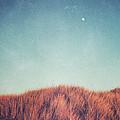 Distant Moon by Lupen  Grainne