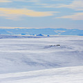 Distant View Of A Musk Ox And Snow by Johnathan Ampersand Esper