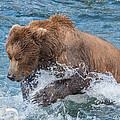Diving For Salmon by Joan Wallner
