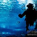 Diving In The Ocean Underwater by Michal Bednarek