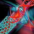 Dna Molecule And Nanotube by Laguna Design/science Photo Library