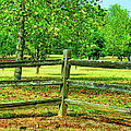 Do Not Fence Me In by Ericamaxine Price