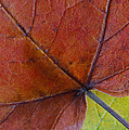 Do Not Leaf Me Now by Juergen Roth