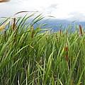 Dobie Swamp Tails by Brandi Maher