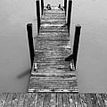 Dock Ducks by David T Wilkinson