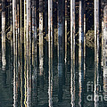 Dock Pilings by David Arment