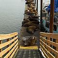 Dock Sea Lions Astoria Or 1 A by John Brueske