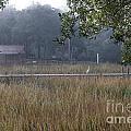 Dock Side Fog by Dale Powell