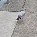 Dockside Stroll by Ann Horn