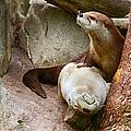 Doctor Otter At The Western North Carolina Nature Center by John Haldane