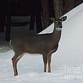 Doe A Deer by Brenda Brown