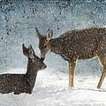 Doe A Deer by Juli Scalzi