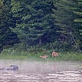 Doe And Fawn In The Early Morning by Thomas Phillips