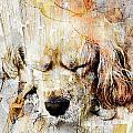 Dog 391-08-13 Marucii by Marek Lutek