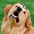 Dog And Butterfly by Christina Rollo