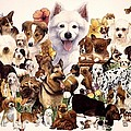 Dog And Puppies by John YATO
