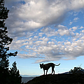 Dog And Sky by Peggy Collins