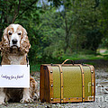 Dog And Suitcase by Mats Silvan