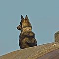 Dog At Point Bonita by SC Heffner