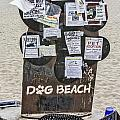 Dog Beach  by Photographic Art by Russel Ray Photos