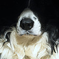 Dog Close Up by Steve Ball