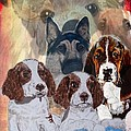 Dog Collage by Teresa  Peterson