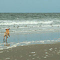 Dog Day Beach by J H Clery