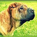 Dog Days by Linda Galok
