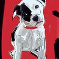 Dog Doggie Red by Go Van Kampen