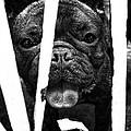 dog by Edward Chan