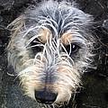 Dog Head by Steve Ball