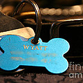 Dog Id by Susan Herber