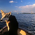 Dog In A Dingy At Put-in-bay Harbor by John Harmon
