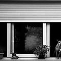 Dog In A Window by Fabrizio Troiani